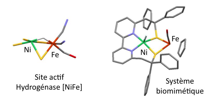 Premier modèle dont l'activité catalytique est centrée sur le nickel de l'hydrogénase [NiFe].